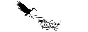 Timothy Logo
